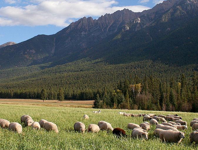 Cutter Ranch