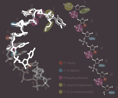 modified_RNA-3_invert2.jpg