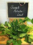 Sweet Potato Leaf,サツマイモ,葉
