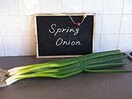 Spring Onion,わけぎ