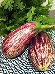 Eggplant,なす,パース