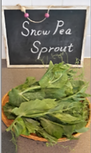 Snow Pea Sprout,豆苗,トウミョウ