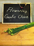 Flowering Garlic Chive,Onion Flower,Garlic Flower,花にら
