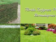 Florida Turfgrass Profiles – Bermudagrass