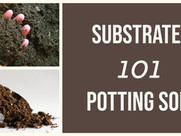 Substrate 101 - Potting Soil