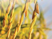 NASA and Florikan Featured in Fertilizer Focus