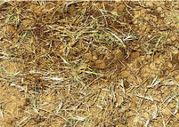 Maintaining nutrition while growing in bermudagrass