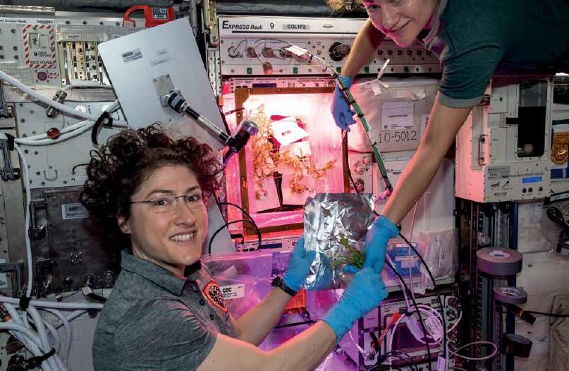 Astronauts Christina Koch and Jessica Meir on the ISS harvesting mizuna.