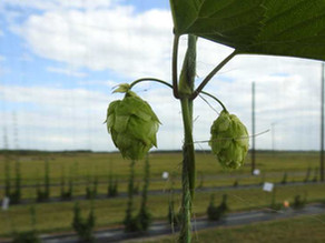 Tapping Into New Crops in Florida