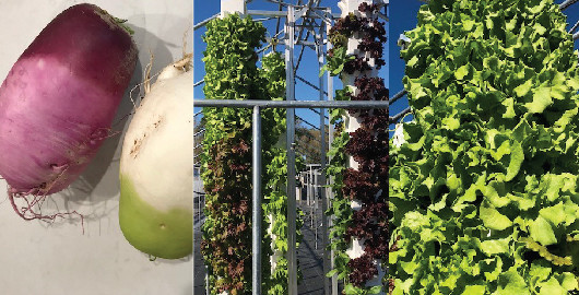 Florikan Continues to Grow in Specialty Agriculture and