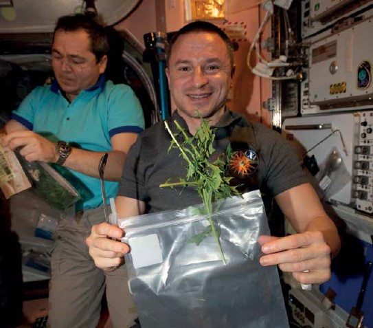 Astronaut Drew Morgan shows off his home grown mizuna on the International Space Station.