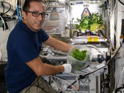 An Update From The ISS and VEGGIE