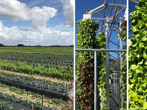 Florikan Continues to Grow in Specialty Agriculture and Vertical Farming