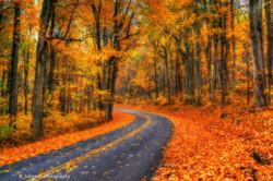 Colors Of Fall 2.jpg