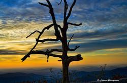 Lonely Sunrise.jpg