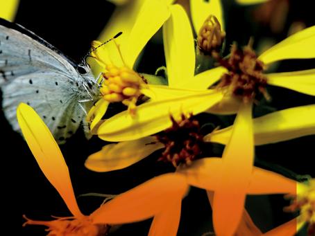 Primavera e allergie