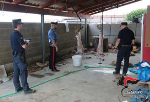 A Saluzzo scoperta dai Carabinieri Forestali macellazione clandestina di ovini e caprini