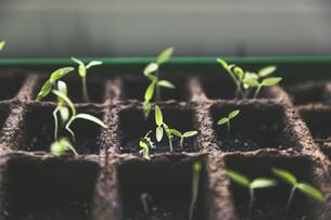 Aperte le iscrizioni alla 31esima edizione del corso di orto-floro-frutticoltura