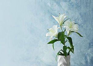 Lily2.jpg