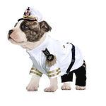 Pets Ahoy Bulldog web image.jpg