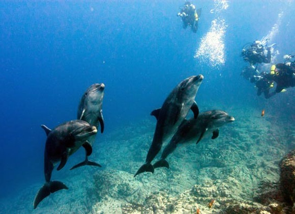 Scuba diving with dolphins