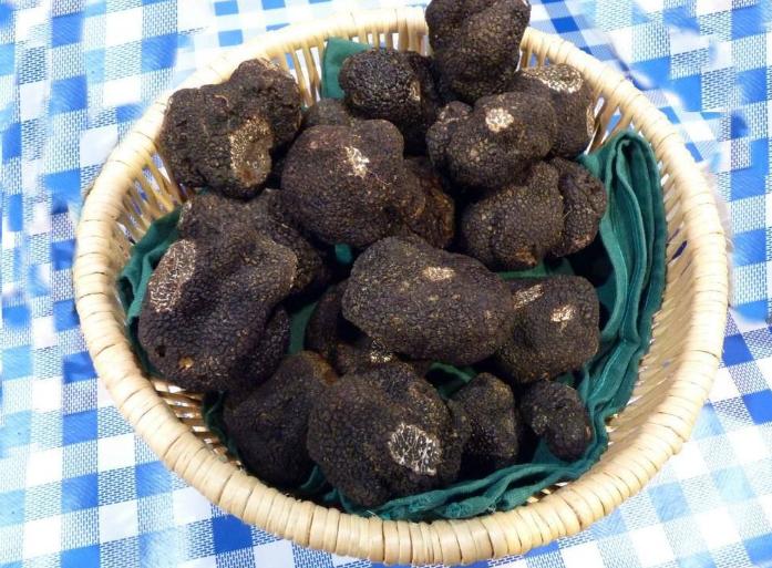 Marche aux truffes