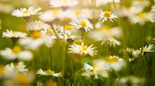 Dicas de saúde na Primavera