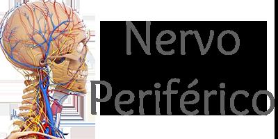 Nervo Periferico.png