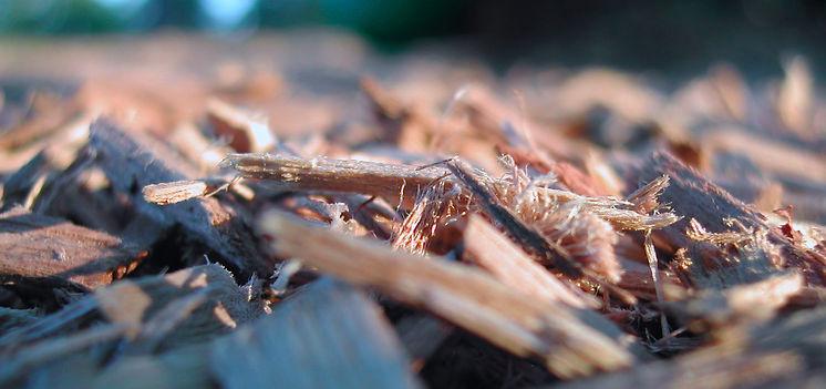 biomass-header2.jpg
