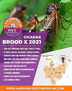 Brood-X-2021---thumbnail.png