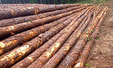 softwood-new-shot.jpg