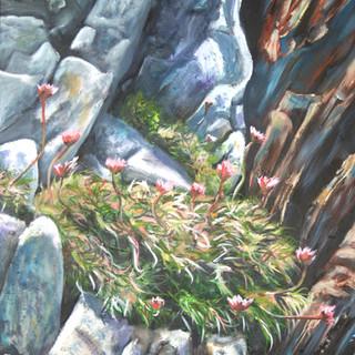 Flowers among the rocks.JPG