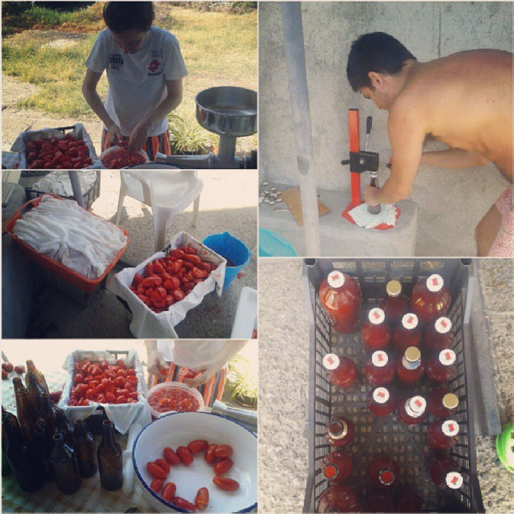 Making tomato sauce from fresh tomatoes in Italy