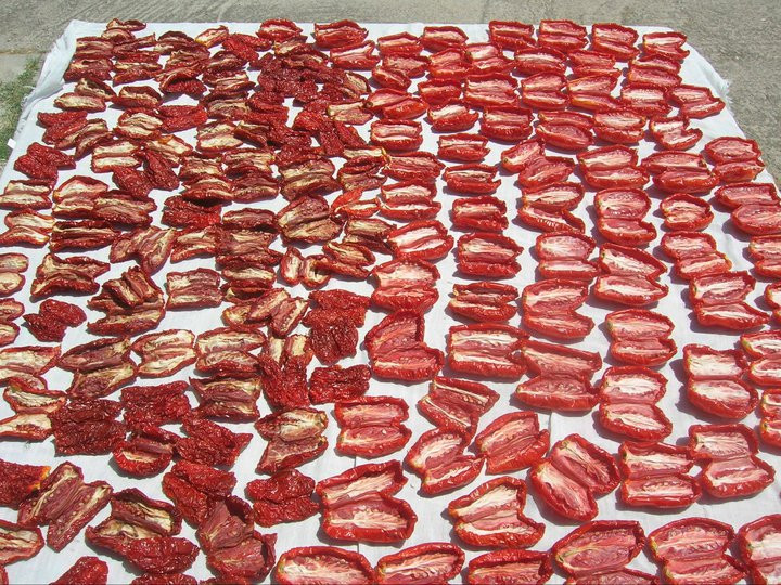 Authentic sun-dried tomatoes being made in Calabria, Italy.