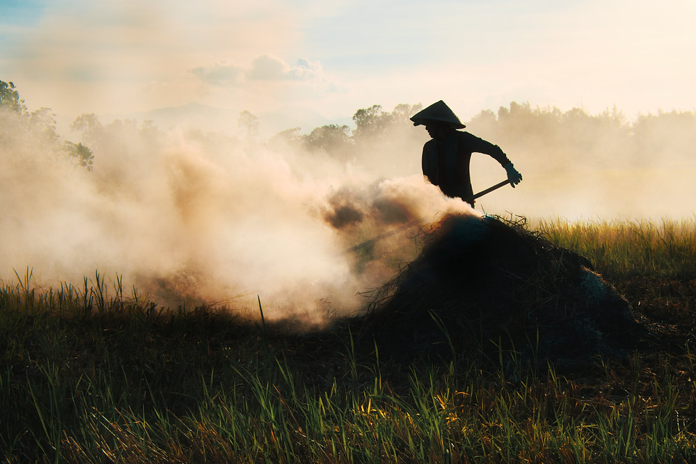 Silhouette of Vietnamese farmer wearing nón lá and burning grain in field