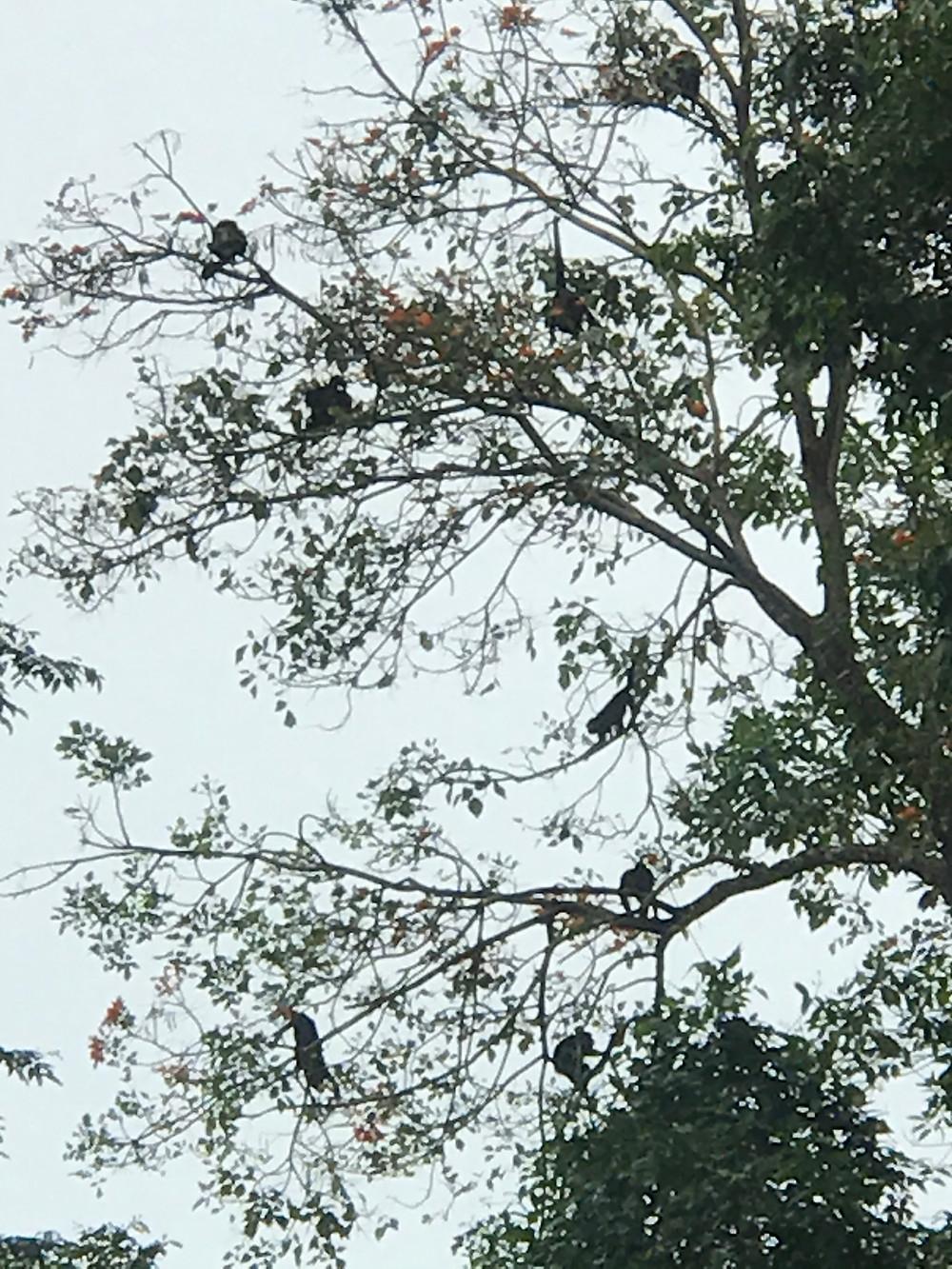 How many monkeys do you see?