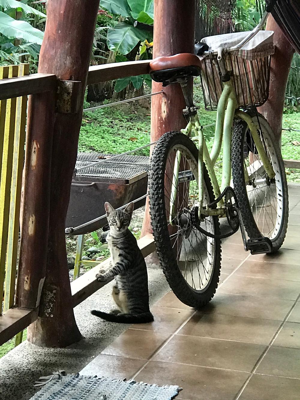 Gatito and the bike