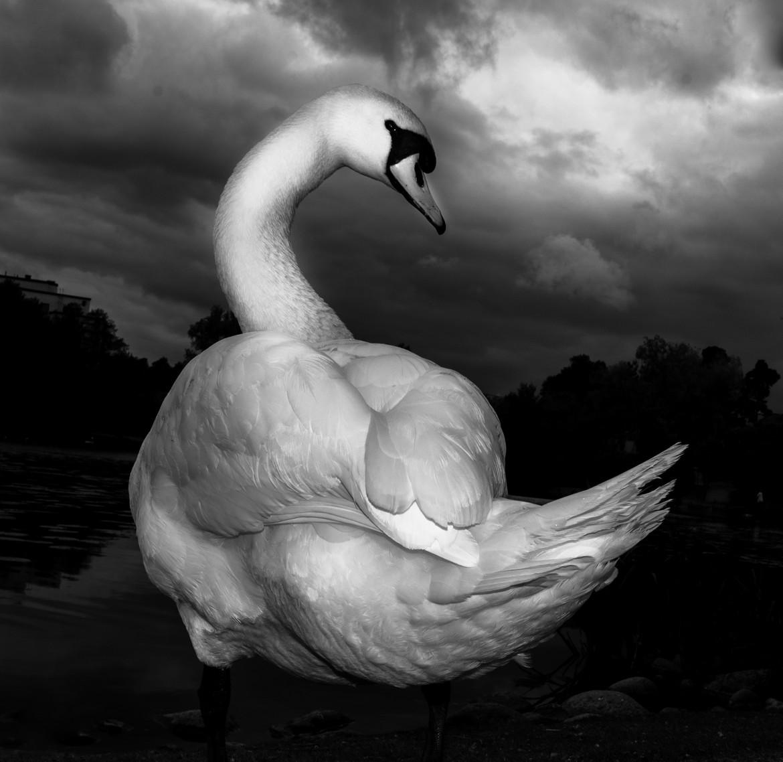fåglar5hemsida_(1_av_3).jpg