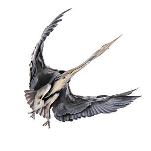 """9 """"Millenium falcon"""" A4 pappersprint 400kr. utställnings ex aluprint 30x30cm 700kr"""