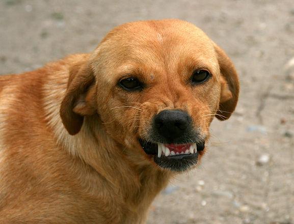 dog-763058_1920.jpg