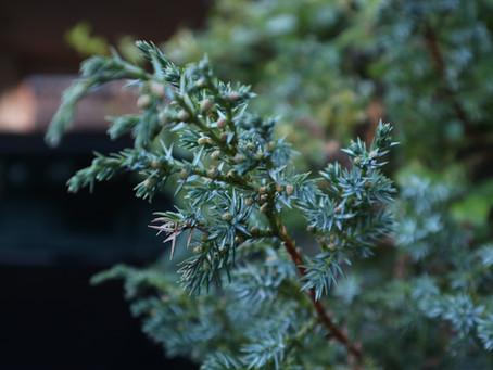 Using Plants in the Winter Garden