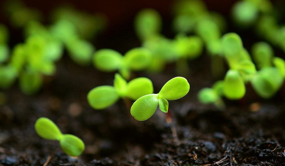 plant-4036131_1920.jpg