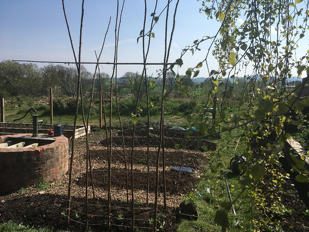 a vegetable garden with raised beds