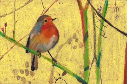 Little robin on branch