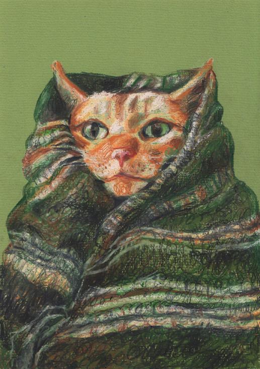 Cat in blanket