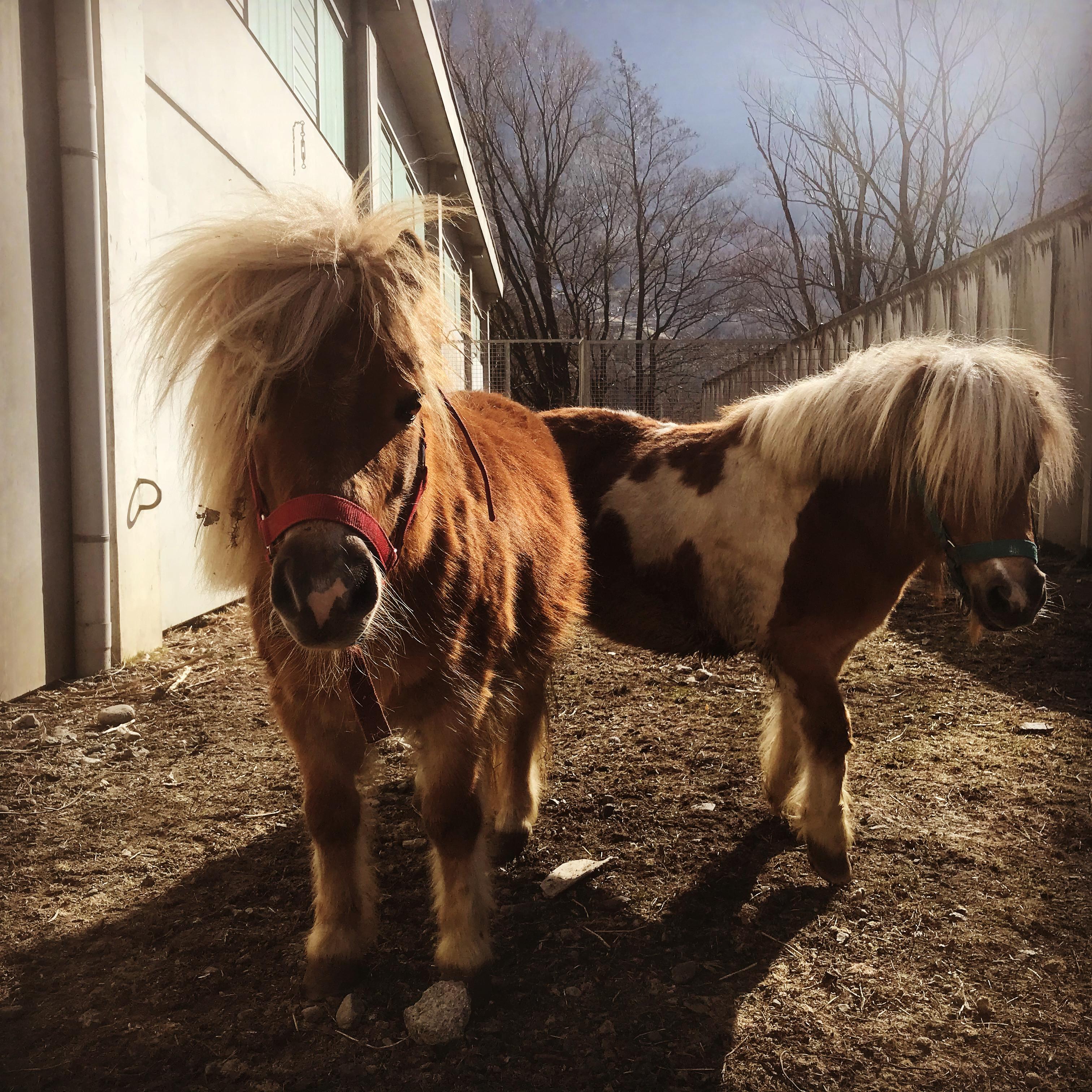 Pony club, attività ludica e pony games