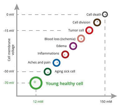Cell Image.jpg