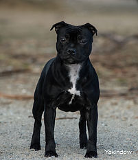 Lucy 1 8 Months.jpg