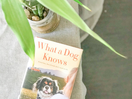 Reviewing What a Dog Knows