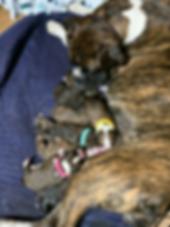 IMG_2749_eZy Watermark_31-03-2019_01-30-